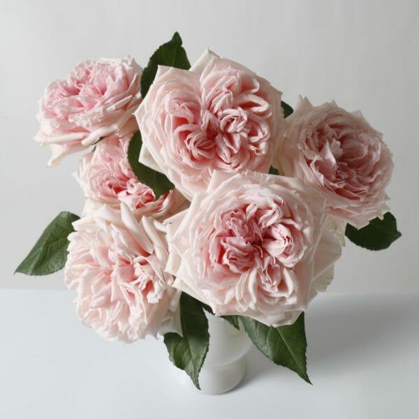 Princess Hitomi Garden Rose Arrangement